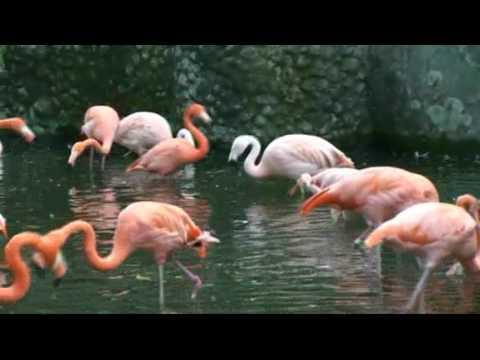 20091003161141東山動物園