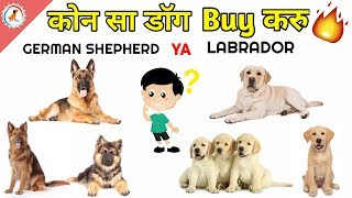 Hume kon sa dog lena chahiye / German shepherd Ya Labrador / How to choose a puppy