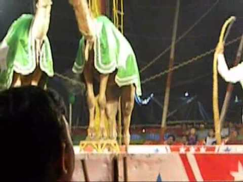 Animal Abuse at Jumbo Circus, Chennai