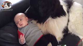 Dogs And Babies - Guard Dogs For Babies - Love Between Dogs And Babies