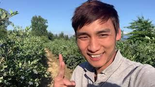 #19: kiếm tiền với blueberries ra sao ? 😍😍😍😍😍