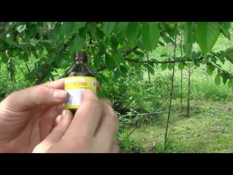 Борьба с личинками майского жука.