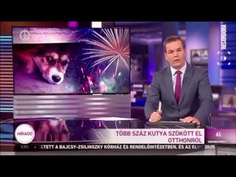 Szilveszter 2019 Nektek Ugatunk Állatvédő Egyesület M1 híradó