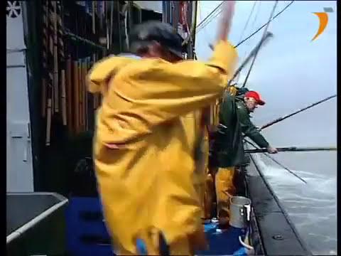 Artes de pesca: Cebo vivo para la pesca de bonito