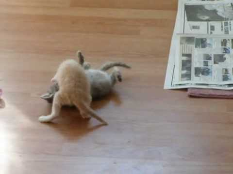 Kitten Surprise!! ( how to break up a cat fight ) The Original