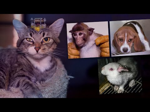 The Multi-Billion Dollar Lie: Animal Experimentation