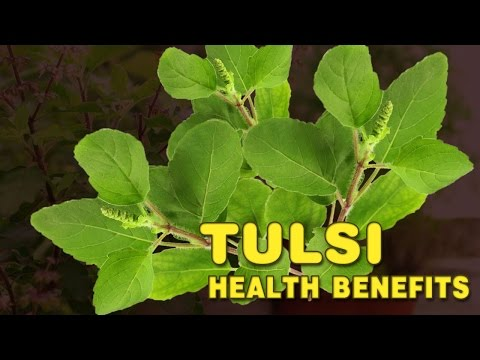Health benefits of Holy Basil - Tulsi holistic plant | Spiritual Videos