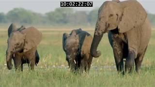 Elephant: King Of The Kalahari