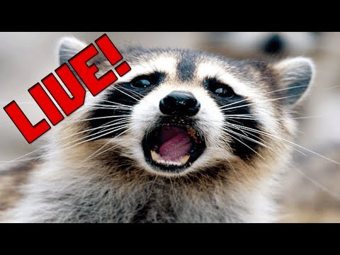 Team Pixel Minecraft Monday! Live with nude raccoons and baby...