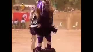 tarian lucu ayam afrika
