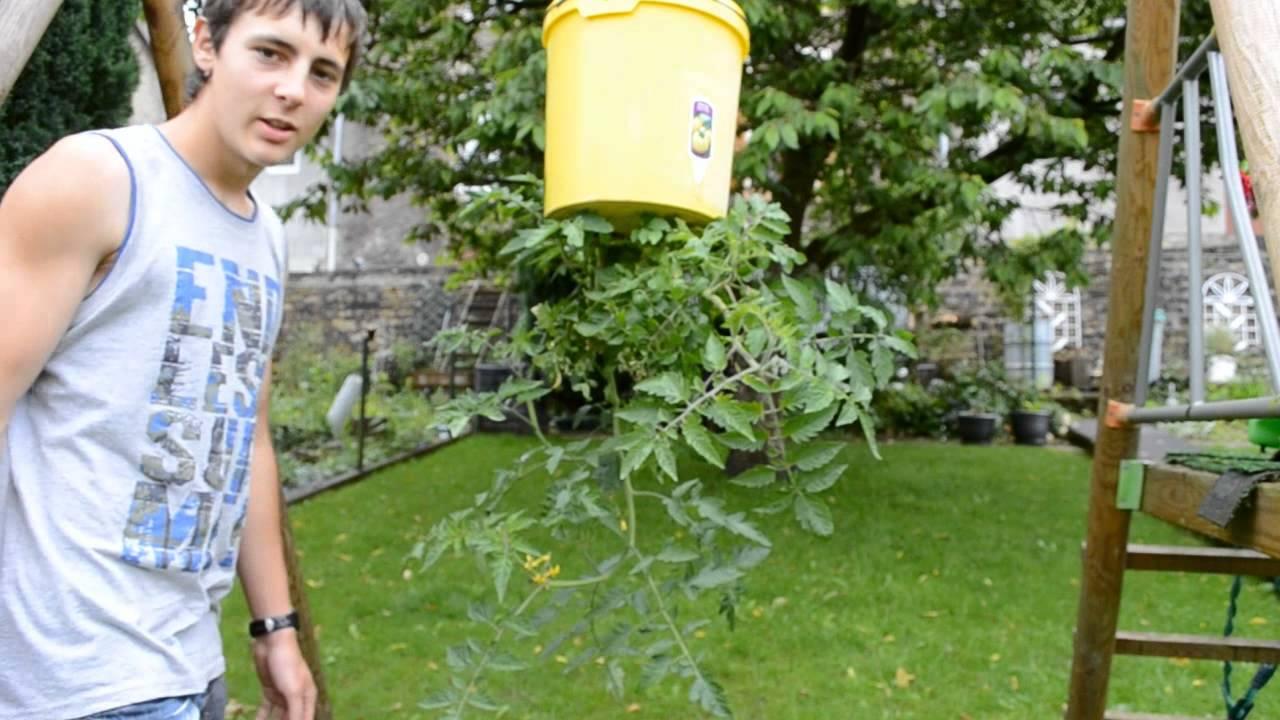R sultat de mon tuto sur comment planter des tomates l 39 envers youtube - Comment planter des tomates ...