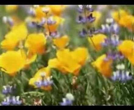 Müziksiz ilahiler 116 - Ötme bülbül_2