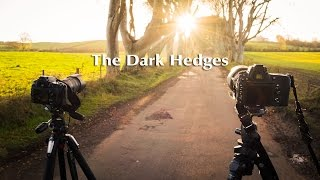 Fotografia krajobrazowa - Plener The Dark Hedges | On Location