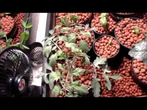 Solar Powered Indoor Hydroponic Tomato &amp  Vegetable Garden