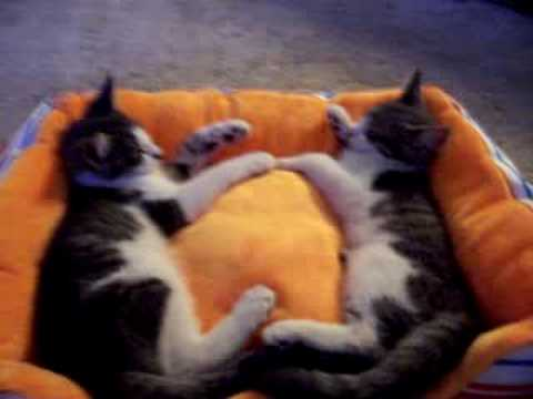 Honey & Sugar ***ADORABLE KITTEN RESCUE STORY*** Video