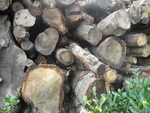 How to convert 22 tons of oak trees into firewood - How to cut tree stumps