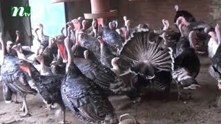 Zillur from Bangladesh successful in cultivating Turkey | News & Current Affairs