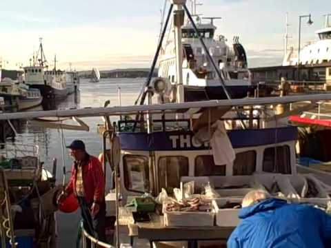 fishermen selling catch daily at Oslo pier
