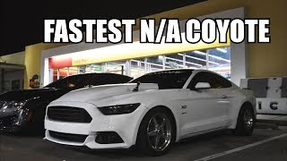 8600 RPM SHIFT!? All Motor Mustang VS The World!