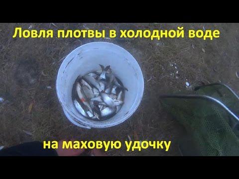 видео ловля плотвы на маховую удочку