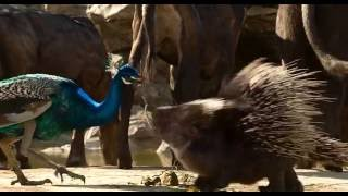 Dhanu_JUNGLEBOOK_Creature_Animation_Showreel