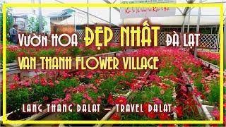 VƯỜN HOA ĐẸP NHẤT ĐÀ LẠT   VAN THANH FLOWER VILLAGE   TRAVEL DALAT