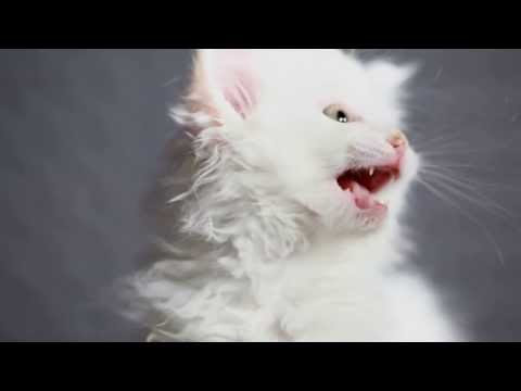 3 Pisici Adorabile video