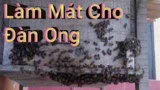 Cách làm giảm nhiệt độ nóng cho đàn ong mật bằng cái khay nước hiệu quả