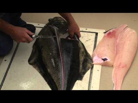 How to fillet a halibut