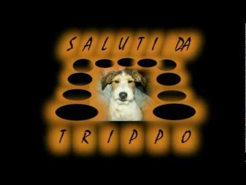 animali divertenti cani trippo cane contadino