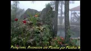 Paisajismo Plantas Napo