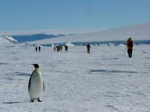 Emperor Penguins in Antarctica filmed by Scott Kurttila