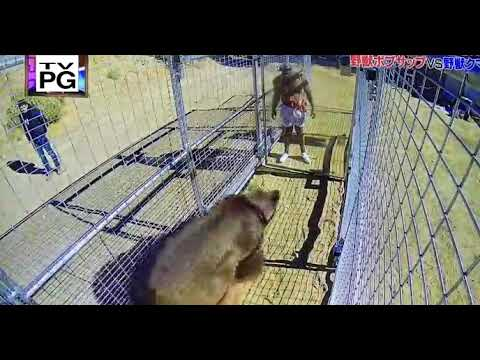Bob Sapp Goes Head To Head With Huge Bear