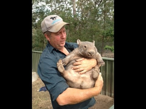 What is a Wombat? #1