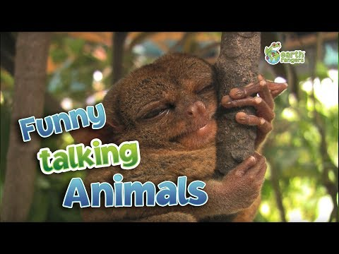 Funny Talking Animals Compilation - Call of the Wild- Earth Rangers