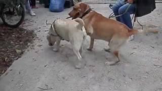 تزاوج الكلاب البوليسية xxnx