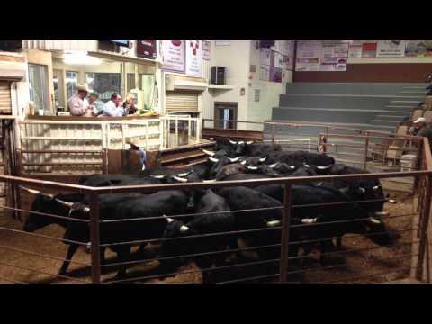 Success Story - Amarillo Livestock Auction