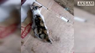 Donmak üzere olan yavru kediyi duyarlı vatandaş kurtardı