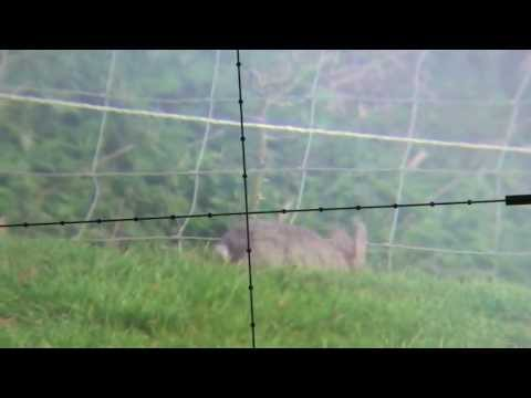 Devon AirGunner Rabbit hunting with the HW100 Scopecam
