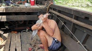 Lặn sông bắt loài cá có nộc cực độc. Ngày câu trúng mánh của anh em   Săn bắt Sóc trăng  