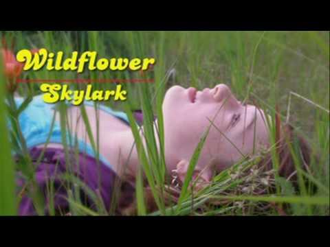 Skylark - Wildflower