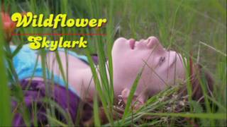 Watch Skylark Wildflower video