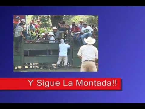 Matagalpa, Toros A Lo Matagalpino