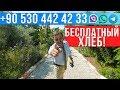 Недвижимость в Турции от застройщика - Бесплатный хлеб! arbathomes.ru
