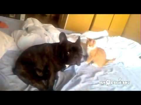 Cat Assassin (Коварный Котенок)