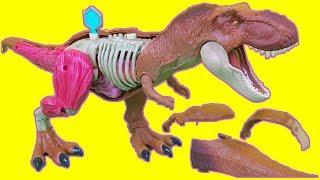 Jurassic World Stem Tyrannosaurus T Rex Anatomy Kit toy
