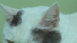 Acupuncture for Cats!