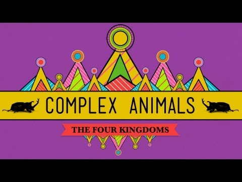 Complex Animals: Annelids & Arthropods - CrashCourse Biology #23