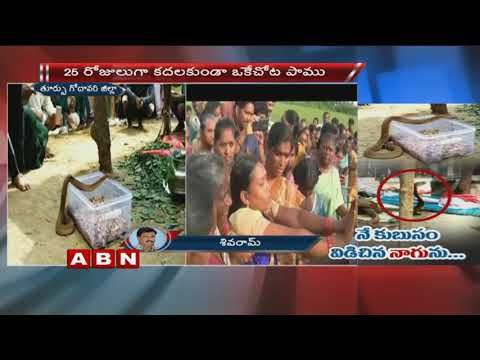Snake worshipped by Villagers in Durgada  | East Godavari | ABN Telugu