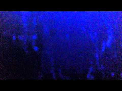 Glofish segundo intento de grabarlos